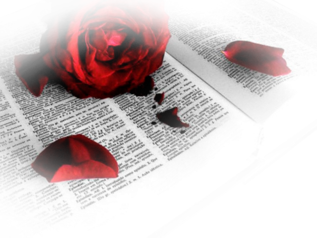 rosa sangre 2